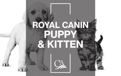 Royal Canin – Puppy & Kitten